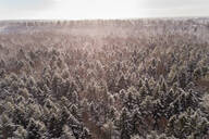 Aerial view of the snowy colorful forest of Muraste in Estonia - AAEF02503