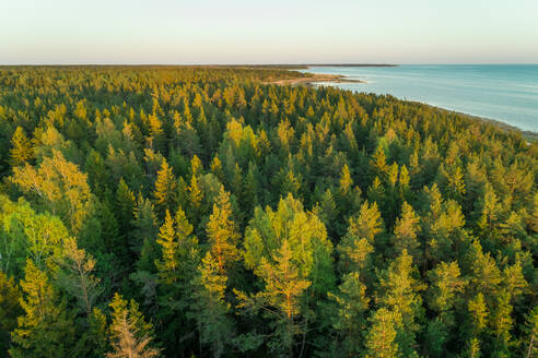 Aerial view of forest in the coast Forby on Vormsi island, Estonia - AAEF02551