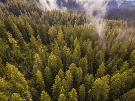 Aerial view of a forest in Oregon, USA - AAEF03039