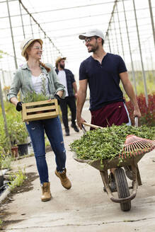 Smiling man and woman transporting plants with a wheelbarrow and wooden box in a greenhouse - JSRF00510