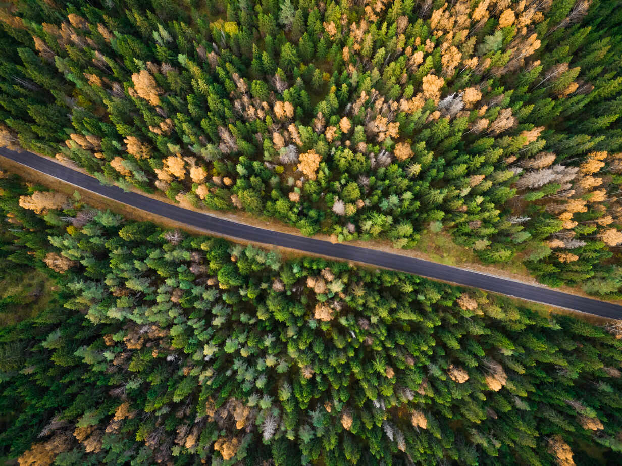 Aerial view of a straight road surrounded by forest during fall season in Estonia - AAEF03594 - Amazing Aerial/Westend61