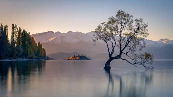Wanaka Tree, Lake Wanaka with the snow capped peaks of Mount Aspiring National Park, Otago, South Island, New Zealand, Pacific - RHPLF01665
