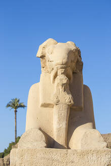 Avenue of Sphinxes, Luxor Temple, UNESCO World Heritage Site, Luxor, Egypt, North Africa, Africa - RHPLF02032
