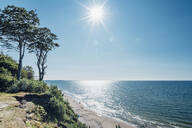 Trees growing at shore by sea against sky on sunny day, Poland - MJF02414