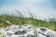 Grass growing by sand against sky during sunny day, Poland - MJF02435