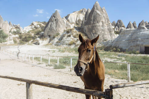 Brown horse standing on land against mountains in Goreme, Cappadocia, Turkey - KNTF03125