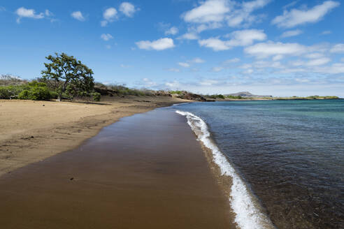 Floreana Island, Galapagos Islands, UNESCO World Heritage Site, Ecuador, South America - RHPLF04735