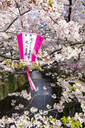 Meguro River during cherry blossom time, Tokyo, Japan, Asia - RHPLF06220