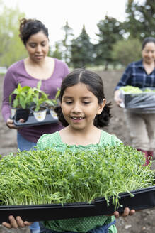 Girl gardening, carrying tray of plants - HEROF38527
