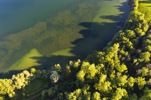 Scenic view of trees growing at Riegsee lakeshore in Bavaria, Germany - LHF00675