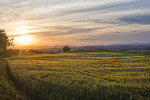 Meadows at sunset, Val d'Orcia (Orcia Valley), UNESCO World Heritage Site, Tuscany, Italy, Europe - RHPLF07588