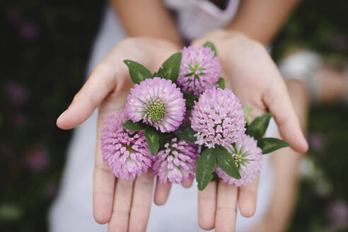 Girl's hands with clover flowers - EYAF00386