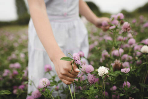 Girl's hands with clover flowers - EYAF00389