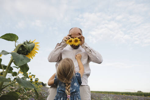 Playful man with daughter in a field covering his eyes with sunflowers - KMKF01061