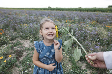 Father tickling daughter with a sunflower in a field - KMKF01070