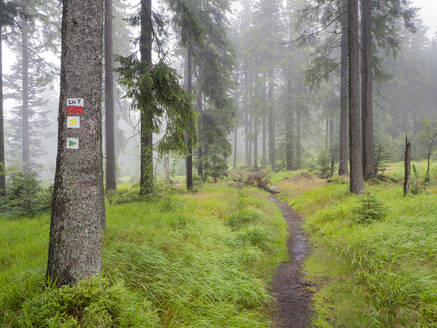 Scenic view of trees growing in Bavarian Forest during foggy weather, Germany - HUSF00077