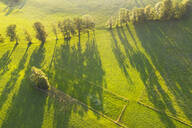 Aerial view of trees with long shadows on meadow at Wackersberg, Isarwinkel, Upper Bavaria, Bavaria, Germany - SIEF08990