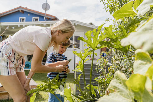 Mother and son caring for vegetable in garden - DIGF08157