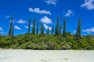 Scenic view of trees growing by sea against blue sky during sunny day, Melanesia, New Caledonia - RUNF02950