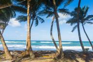 Palm trees growing at beach against blue sky in Sauteurs, Grenada, Caribbean - RUNF02972