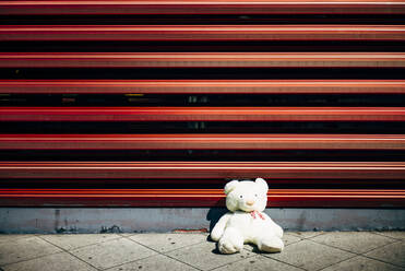 Lonely teddy bear at red wall - OCMF00699