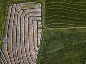 Aerial view of agricultural field, Bali, Indonesia - KNTF03359