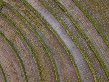 Aerial view of rice terraced field, Bali, Indonesia - KNTF03365