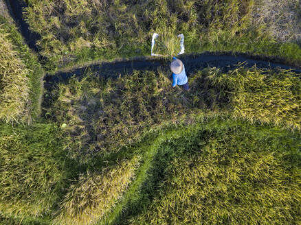 Aerial view of male farmer working in rice paddy, Bali, Indonesia - KNTF03373
