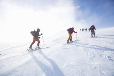 Cross country skiing - FOLF11049