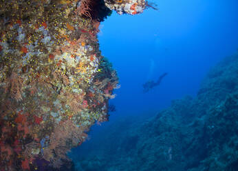 La Revellata reef at Calvi with diver in background at Corsica, France - ZCF00804