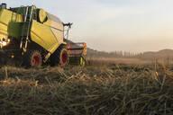 Organic farming, wheat field, harvest, combine harvester in the evening - SEBF00216