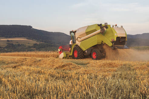 Organic farming, wheat field, harvest, combine harvester in the evening - SEBF00222