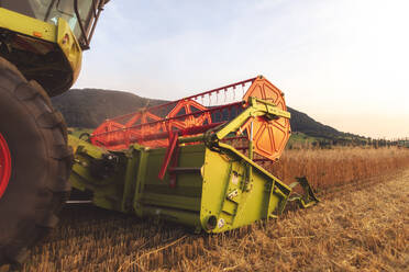 Organic farming, wheat field, harvest, combine harvester in the evening - SEBF00234