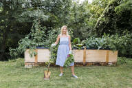 Blond woman harvesting mangold from her raised bed in her own garden - HMEF00516