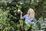 Blond smiling woman harvesting mangold - HMEF00525