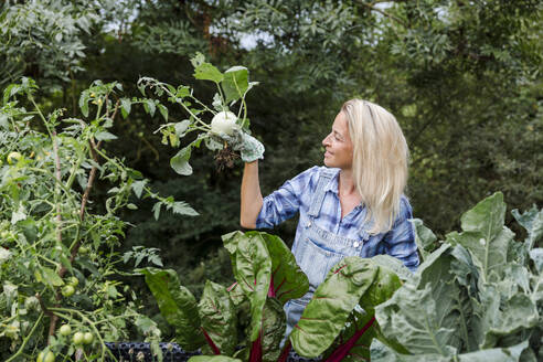Blond smiling woman harvesting mangold - HMEF00525