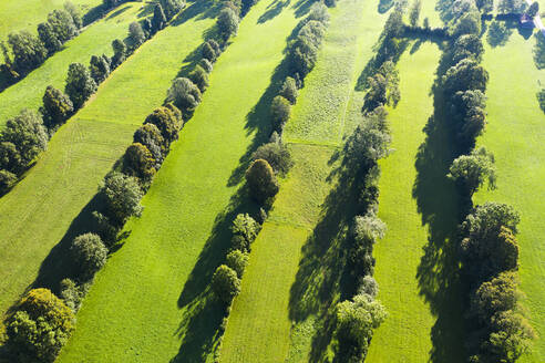 High angle view of Natural monument hedge landscape, Gaissach, Lenggries, Isarwinkel, Upper Bavaria, Bavaria, Germany - SIEF09024