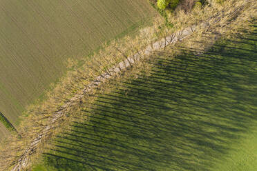 Aerial view of trees with shadow on grassy land at Icking, Germany - LHF00695