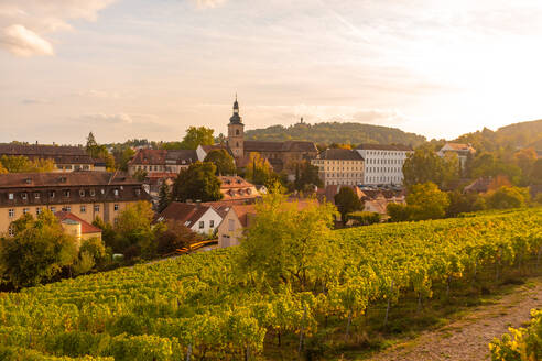 Wine fields by Altenburg, old fortress in Bamberg, UNESCO World Heritage Site, Bavaria, Germany, Europe - RHPLF10059