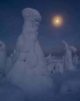 Moonrise over snow covered trees, Tykky, Kuntivaara, Kuusamo, Finland, Europe - RHPLF10194