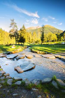 Morning in the park in Val Sozzine, Ponte di Legno, Brescia province, Lombardy, Italy, Europe - RHPLF10943