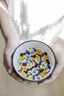 essbare Blüten in einer Schüssel, Acker Stiefmütterchen, Viola arvensis, Veilchenart, von zwei Händen gehalten, Studio - STBF00379