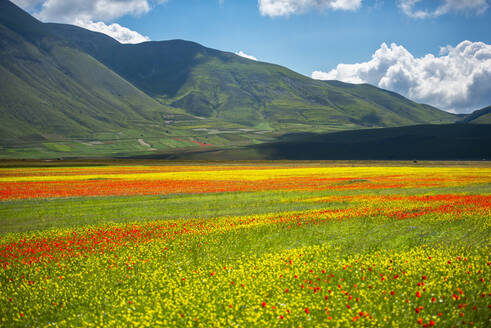 Flowers blooming on plateau Piano Grande, Sibillini National Park, Umbria, Italy, Europe - RHPLF12242
