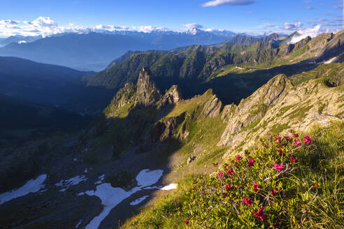 Rhododendrons flowering with Rhaetian Alps in the background, Valgerola, Orobie Alps, Valtellina, Lombardy, Italy, Europe - RHPLF12260