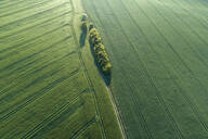 Germany, Mecklenburg-Western Pomerania, Aerial view of dirt road between green vast wheat fields in spring - RUEF02320