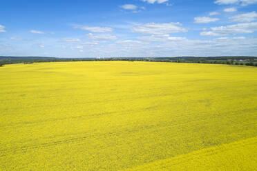 Germany, Mecklenburg-Western Pomerania, Aerial view of vast rapeseed field in spring - RUEF02335