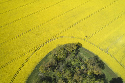 Germany, Mecklenburg-Western Pomerania, Aerial view of vast rapeseed field around edge of forest in spring - RUEF02338