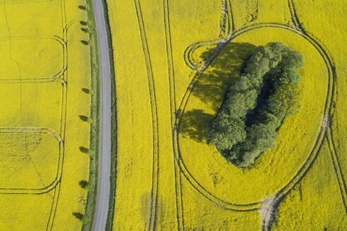 Germany, Mecklenburg-Western Pomerania, Aerial view of empty highway between vast rapeseed fields in spring - RUEF02350