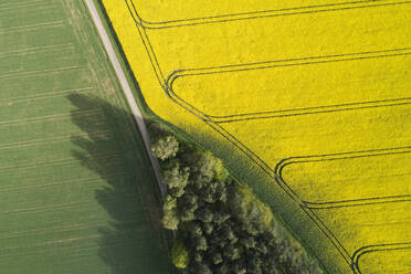 Germany, Bavaria, Aerial view of dirt road between rapeseed and wheat fields in spring - RUEF02353