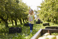Girl harvesting organic williams pears - SEBF00273